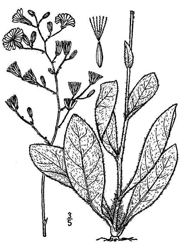 Image of queendevil