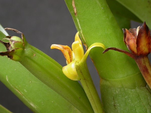 Image of Hidden orchid