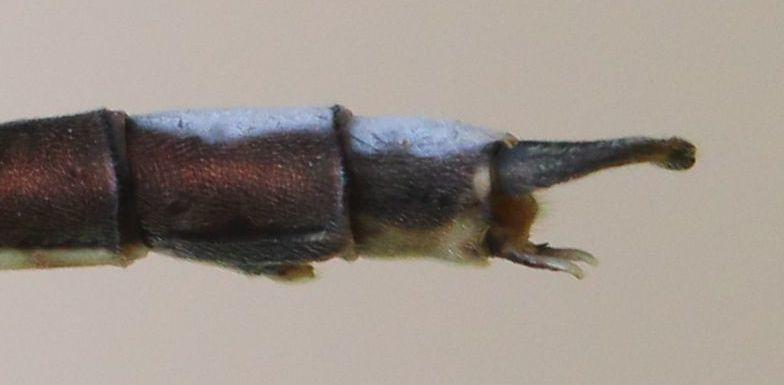 Image of Drakensberg Malachite