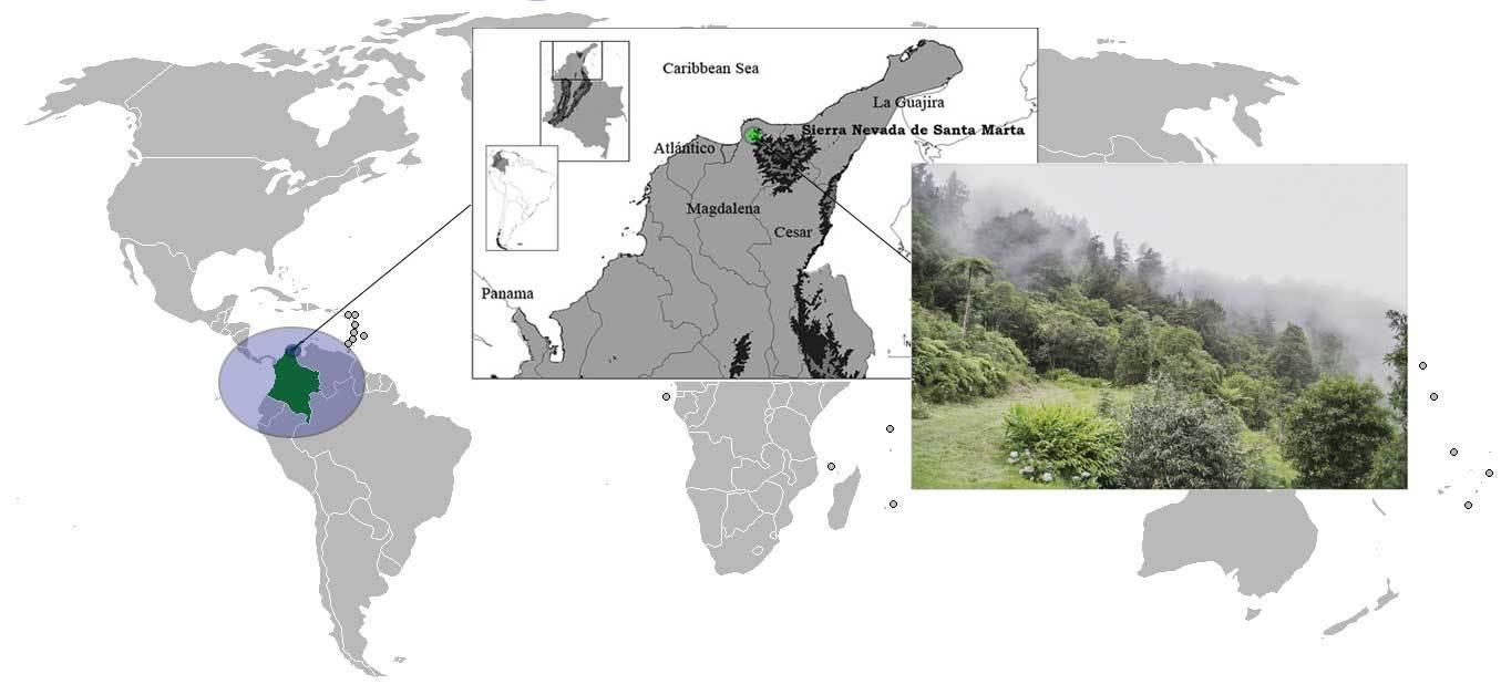 """<span class=""""translation_missing"""" title=""""translation missing: en.medium.untitled.map_image_of, page_name: &lt;i&gt;Kankuamo marquezi&lt;/i&gt; Perafán, Galvis &amp; Gutiérrez 2016"""">Map Image Of</span>"""