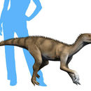 Image of Silesauridae