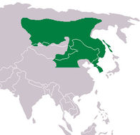 "<span class=""translation_missing"" title=""translation missing: en.medium.untitled.map_image_of, page_name: Siberian Musk Deer"">Map Image Of</span>"