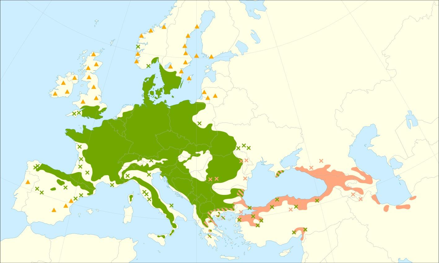 "<span class=""translation_missing"" title=""translation missing: en.medium.untitled.map_image_of, page_name: European beech"">Map Image Of</span>"