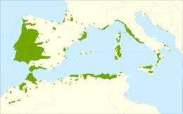 "<span class=""translation_missing"" title=""translation missing: en.medium.untitled.map_image_of, page_name: cork oak"">Map Image Of</span>"