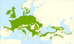 "<span class=""translation_missing"" title=""translation missing: en.medium.untitled.map_image_of, page_name: Sessile Oak"">Map Image Of</span>"