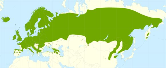 "<span class=""translation_missing"" title=""translation missing: en.medium.untitled.map_image_of, page_name: European Rowan"">Map Image Of</span>"