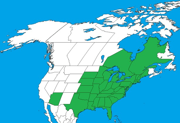 "<span class=""translation_missing"" title=""translation missing: en.medium.untitled.map_image_of, page_name: eastern poison ivy"">Map Image Of</span>"