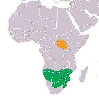 Map of <i>Ceratotherium <i>simum</i></i> simum