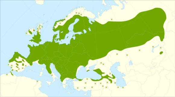 """<span class=""""translation_missing"""" title=""""translation missing: en.medium.untitled.map_image_of, page_name: Alder Buckthorn"""">Map Image Of</span>"""