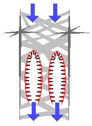 Image of Euplectella