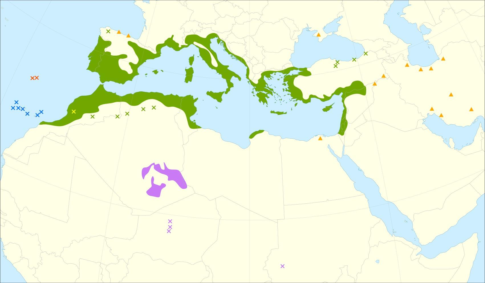 "<span class=""translation_missing"" title=""translation missing: en.medium.untitled.map_image_of, page_name: olive tree"">Map Image Of</span>"