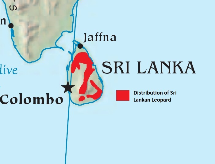 "<span class=""translation_missing"" title=""translation missing: en.medium.untitled.map_image_of, page_name: Sri Lankan leopard"">Map Image Of</span>"