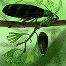 Image de Titanoptera