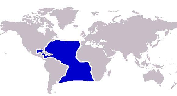 "<span class=""translation_missing"" title=""translation missing: en.medium.untitled.map_image_of, page_name: &lt;i&gt;Makaira nigricans&lt;/i&gt; Lacepède 1802"">Map Image Of</span>"