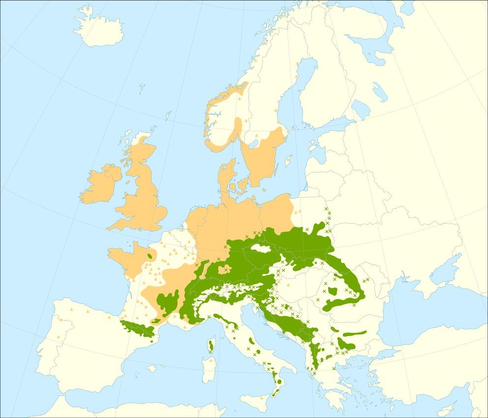 "<span class=""translation_missing"" title=""translation missing: en.medium.untitled.map_image_of, page_name: European Silver Fir"">Map Image Of</span>"