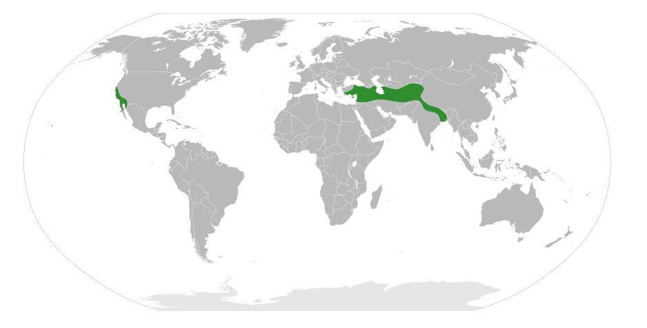 Map of datisca