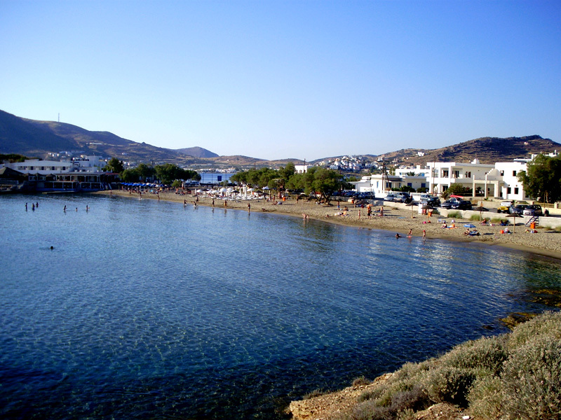 Image of posidonia