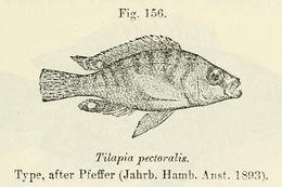 Image of Ctenochromis