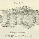 Image of Orthochromis