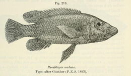 Image of Stigmatochromis