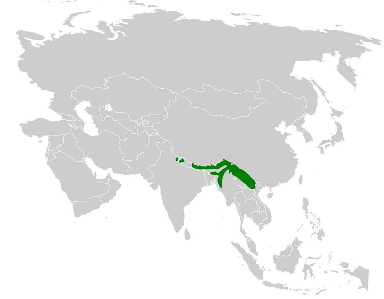 Map of <i>Delichon nipalensis</i>