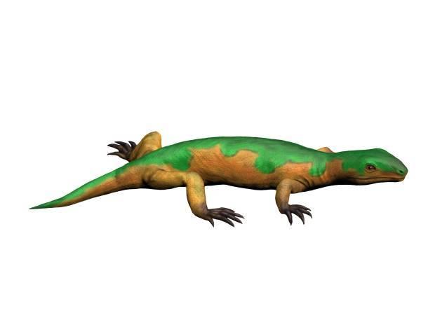 Image of Microsauria