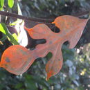 Image of hirsute artocarpus