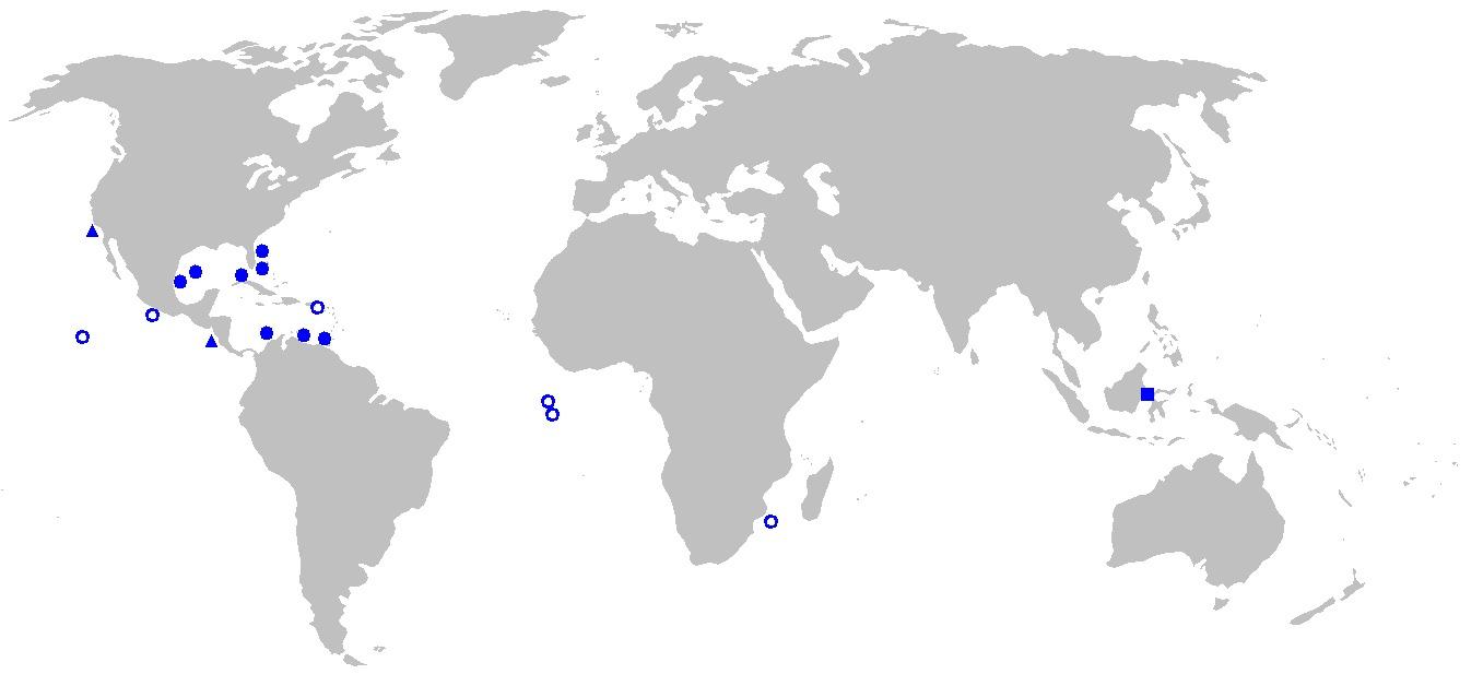 Image of <i>Thaumatichthys pagidostomus</i> Smith & Radcliffe 1912