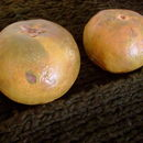 Image of Eggfruit