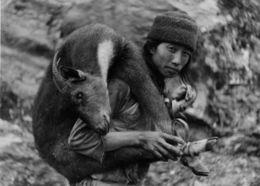 Image of Himalayan Serow