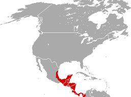 Map of Central American Red Brocket Deer