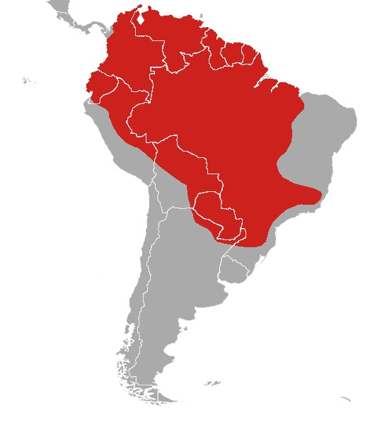"<span class=""translation_missing"" title=""translation missing: en.medium.untitled.map_image_of, page_name: South American Red Brocket"">Map Image Of</span>"
