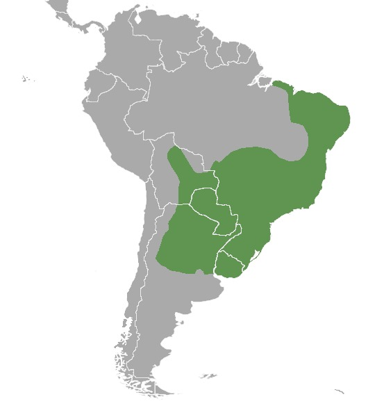 "<span class=""translation_missing"" title=""translation missing: en.medium.untitled.map_image_of, page_name: South American Brown Brocket"">Map Image Of</span>"