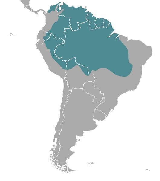 Map of <i>Mazama nemorivaga</i>
