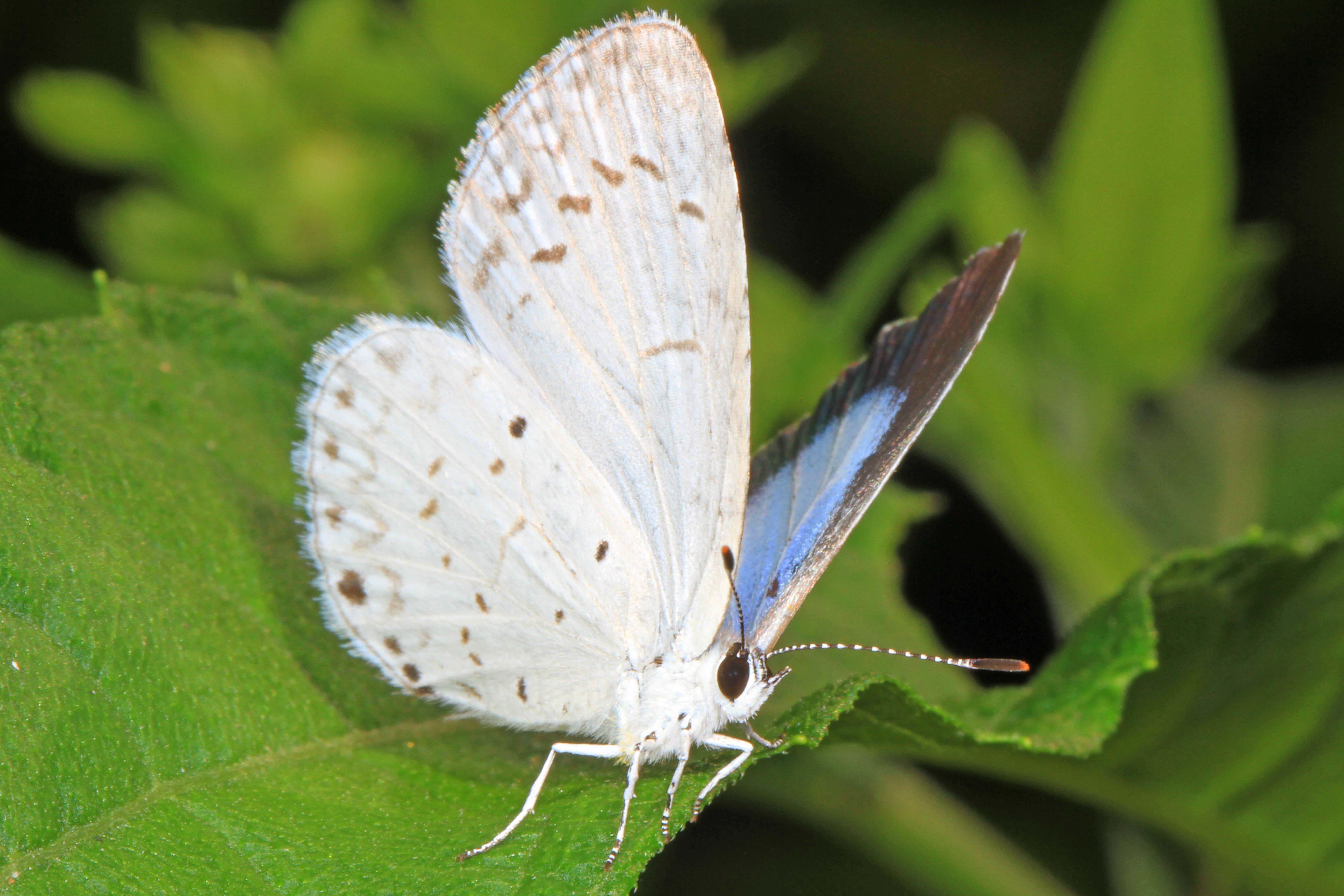 Image of Azures