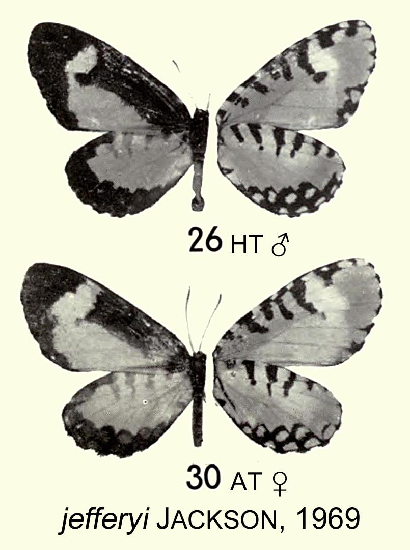 Image of <i>Telipna aurivillii</i> Rebel 1914