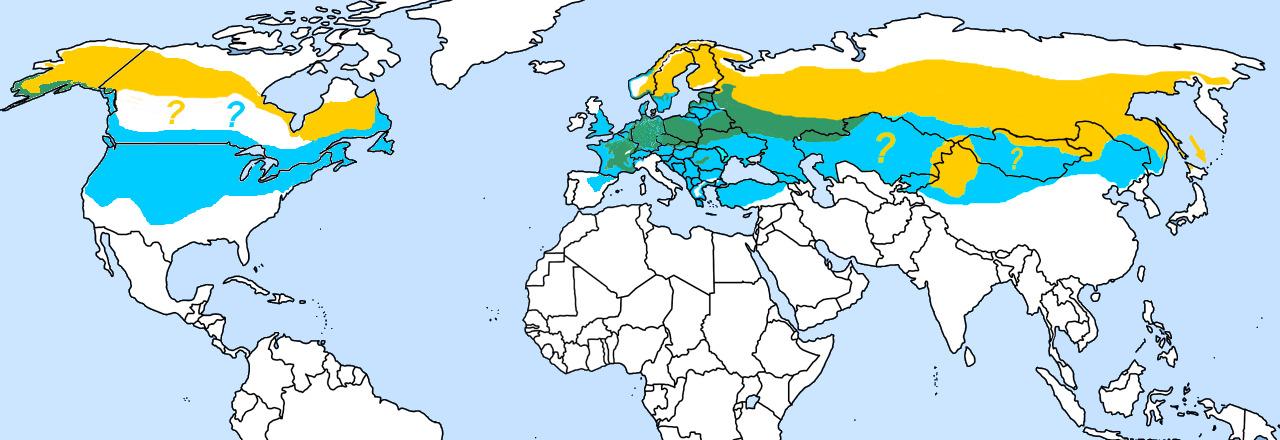 Map of Great Grey Shrike