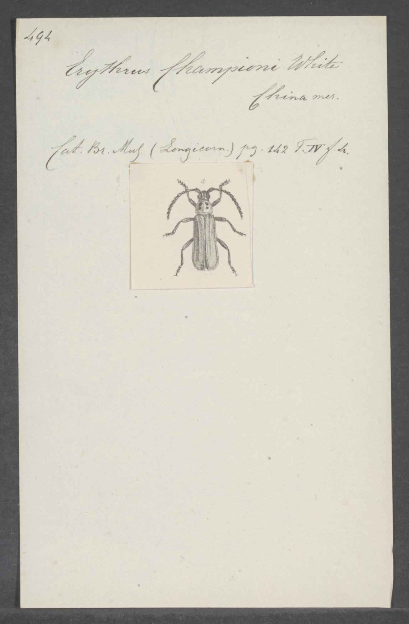 Image of Erythrus