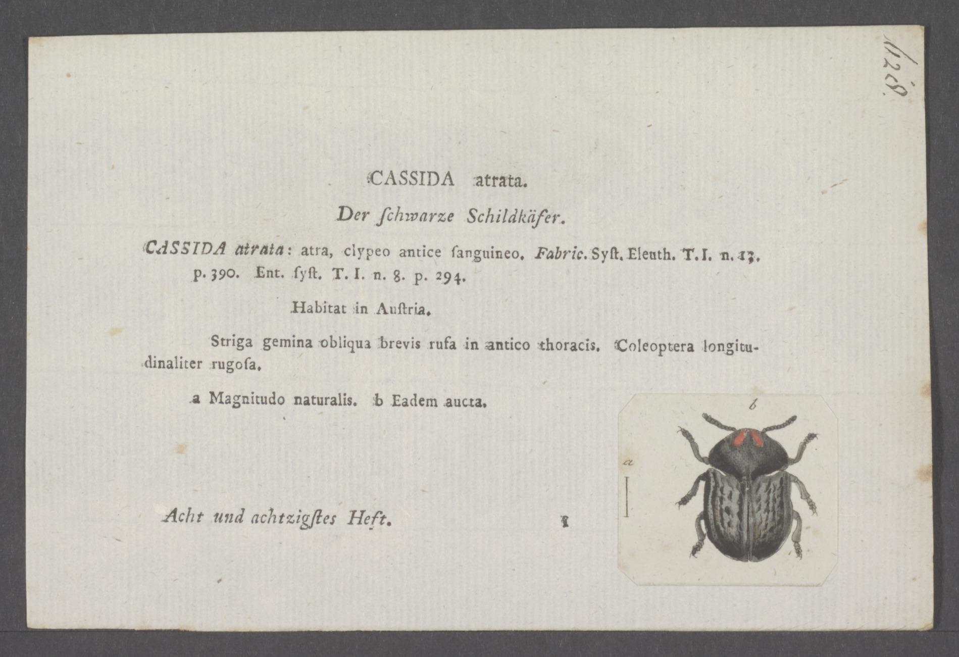 Image of Cassida