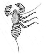 Image of <i>Mastigoproctus colombianus</i> Mello-Leitão 1940