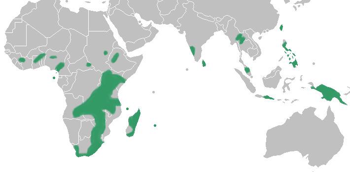 Map of Disperis