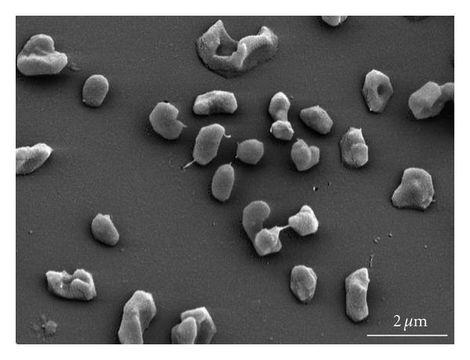 Image of Methanomicrobia