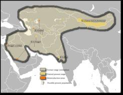 Map of <i>Equus onager</i>