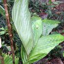 Image of Bactris palms