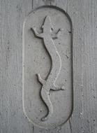 Image of cave salamander
