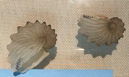 Image of Argonauts