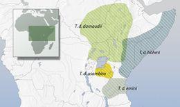 "<span class=""translation_missing"" title=""translation missing: en.medium.untitled.map_image_of, page_name: African barbets"">Map Image Of</span>"