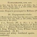 Image of Harpagomantis