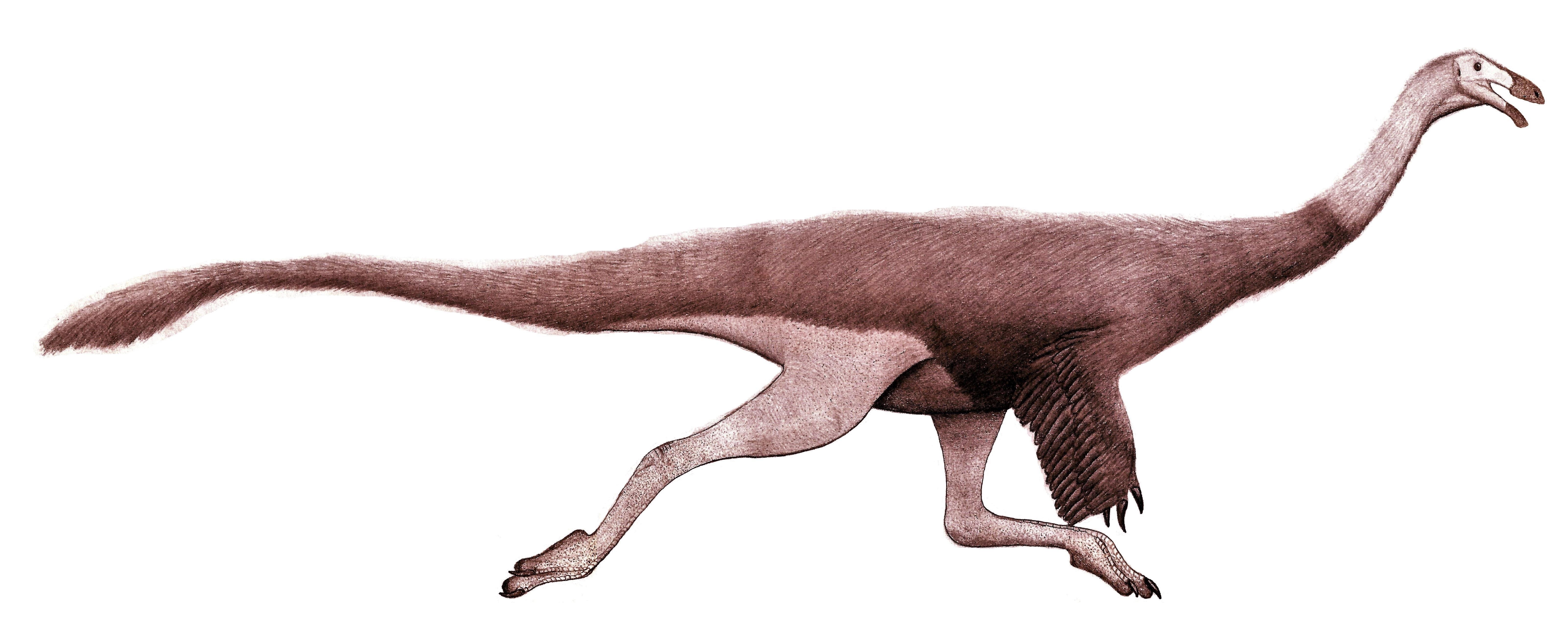 Image of ornithomimids