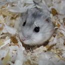 Image of hamsters